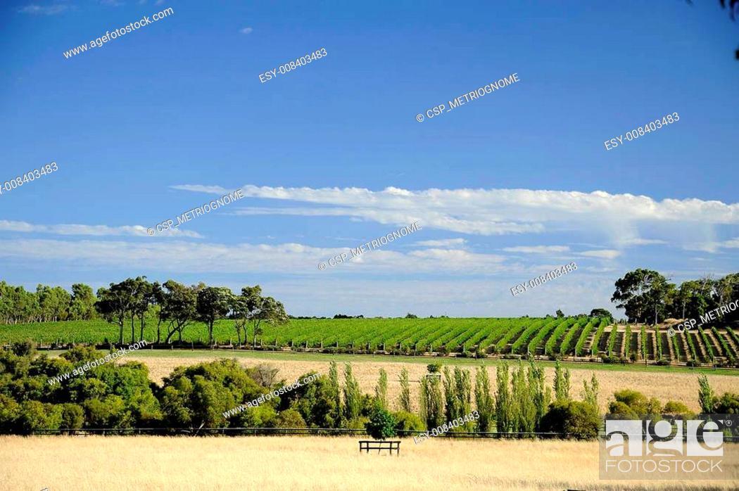Imagen: vine country.