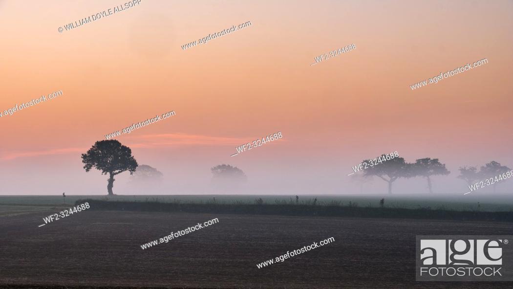 Imagen: Mist drifts across the Suffolk Landscape at dawn.