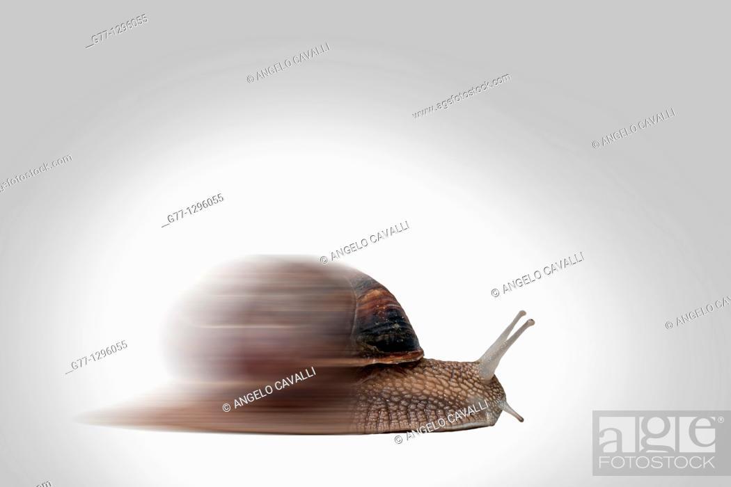 Stock Photo: Speeding snail.