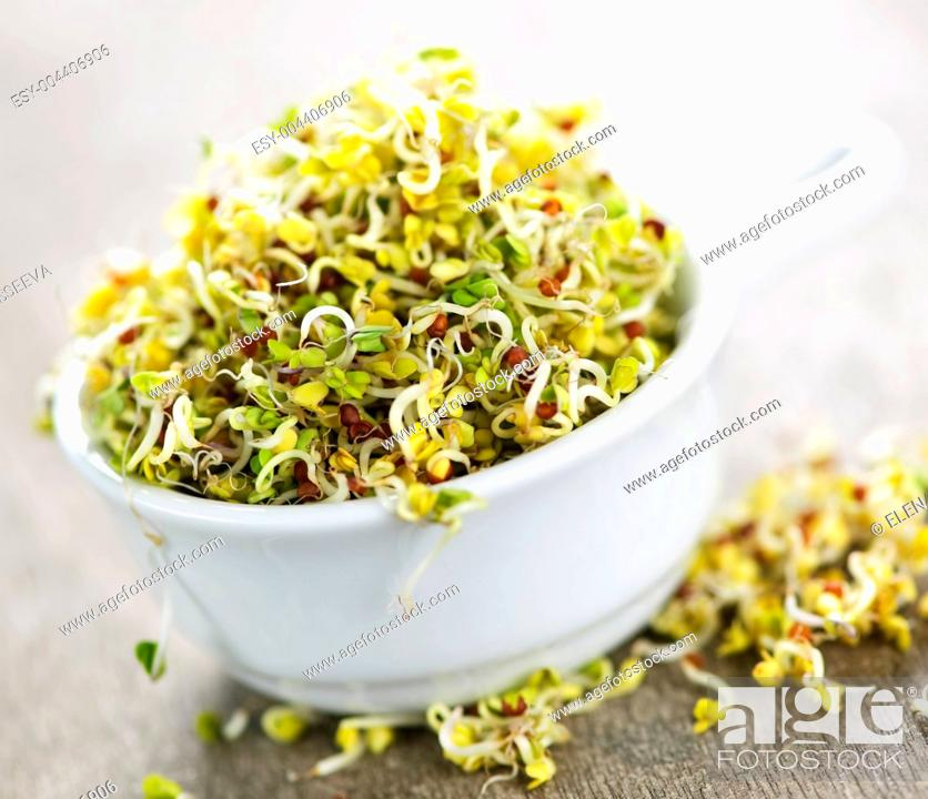 Imagen: Alfalfa sprouts in a cup.