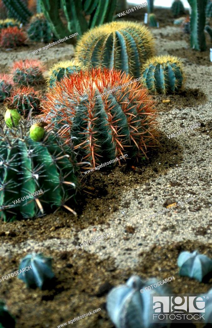Stock Photo: spitze, Bernhard, cactaceae, cacti, cactus.