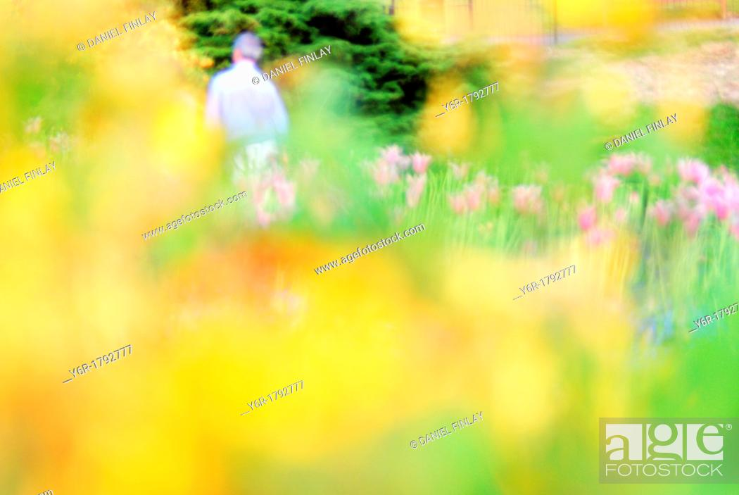 Stock Photo: Spring flower blur in Golder's Hill Park, Hampstead, London, England.