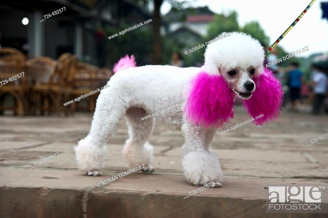 Stock Photo: A funny custom dog in Ping Le, Sichuan Province.