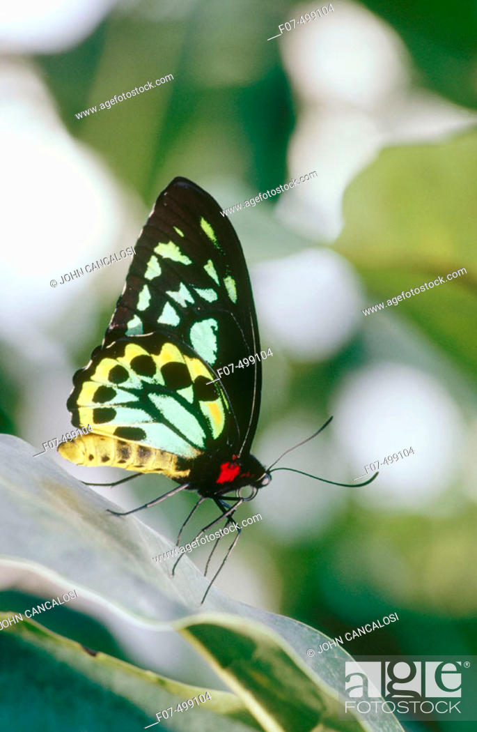 Stock Photo: Butterfly. Costa Rica.