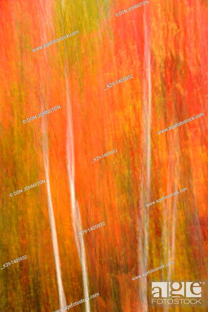 Stock Photo: Autumn trees Camera movement.