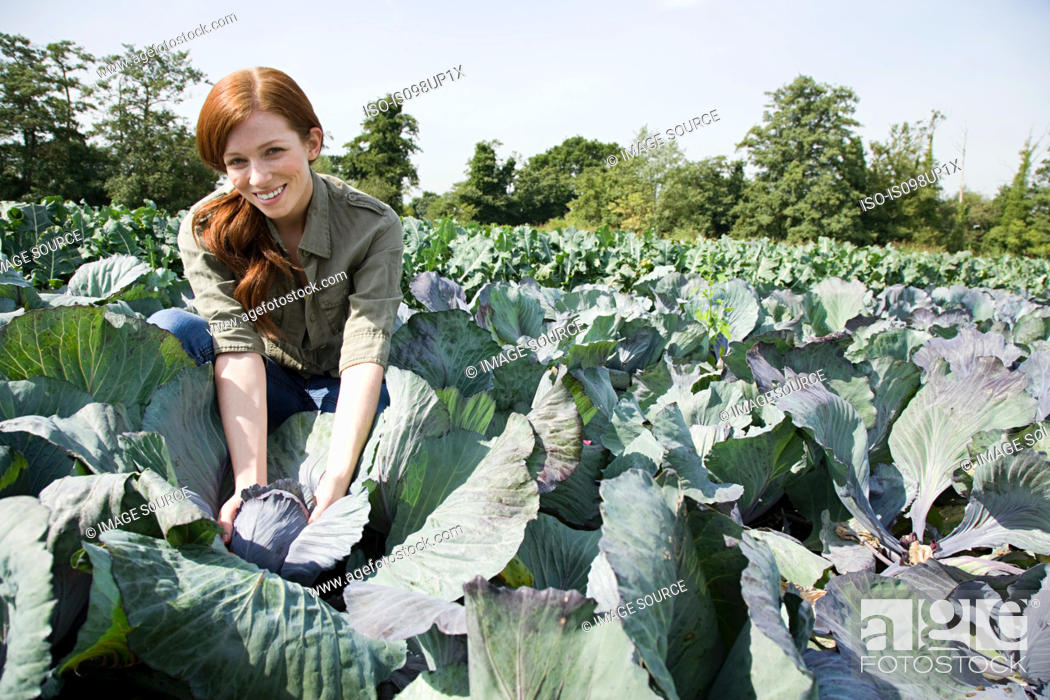 Stock Photo: Woman picking cabbages in field.