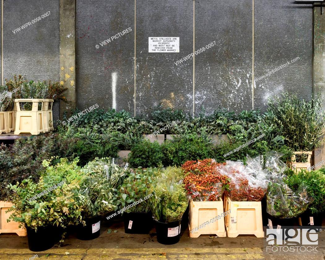 Plants in the flower market. New Covent Garden Market, London ...