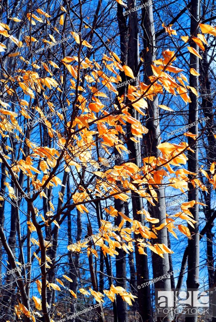 Stock Photo: Forest in late fall with bright blue sky.