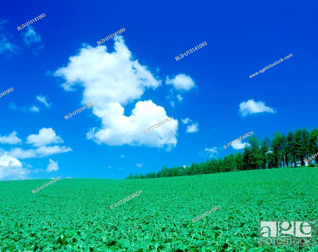 Stock Photo: Field and blue sky(beat field).