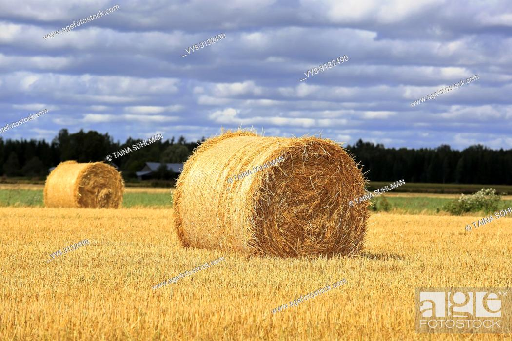 Stock Photo: Agricultural landscape of sunlit golden straw bales on stubble field with dark cloudy sky on background.