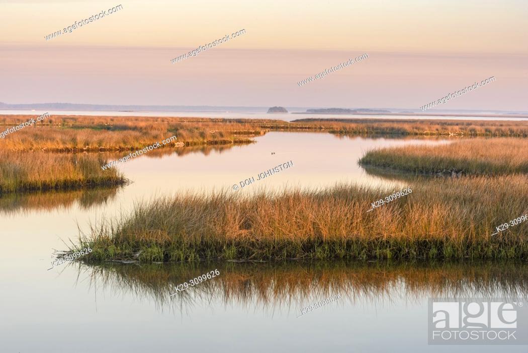Stock Photo: Salt water marshes at dawn, St. Marks NWR, Florida, USA.