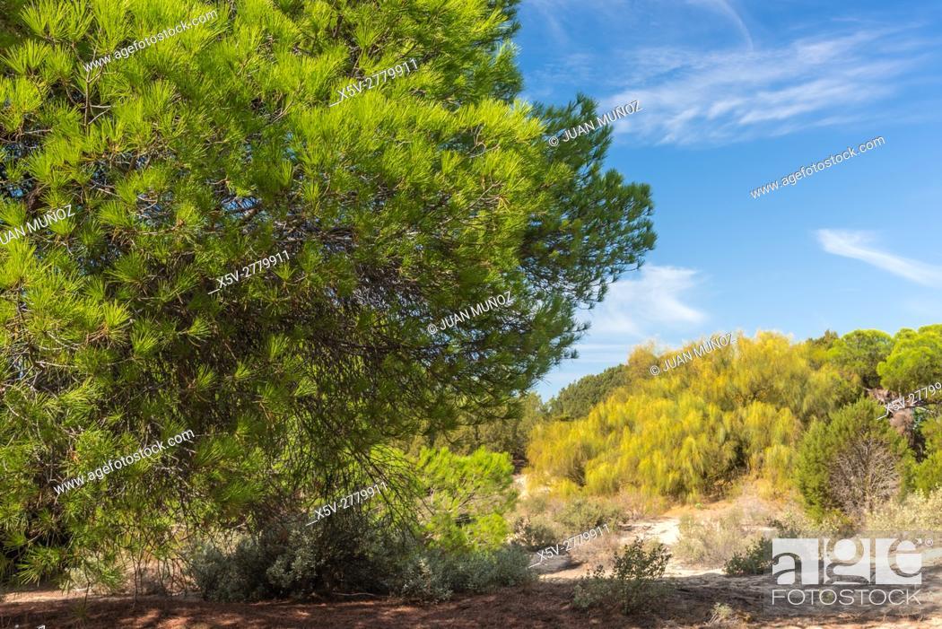 Stock Photo: Enebrales Natural Park of Punta Umbria, Huelva, Andalucia, Spain.