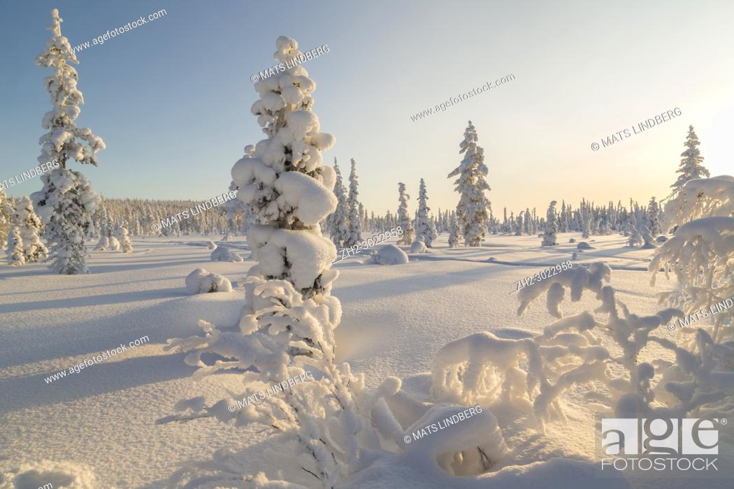 Stock Photo: Winter landscape in clear blue sky with snowy trees, Gällivare county, Swedish Lapland, Sweden.