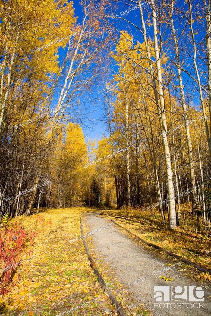 Stock Photo: Foot trail leads into the forest near Haines Junction. Fall in the Yukon Territory, Canada.