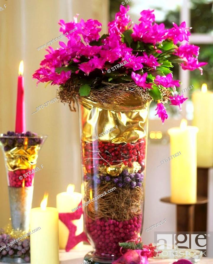 stock photo christmas cactus in glass with christmas decorations - Cactus Christmas Decorations