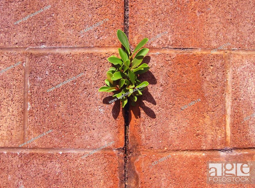 Stock Photo: Plant grows in cinderblock wall.