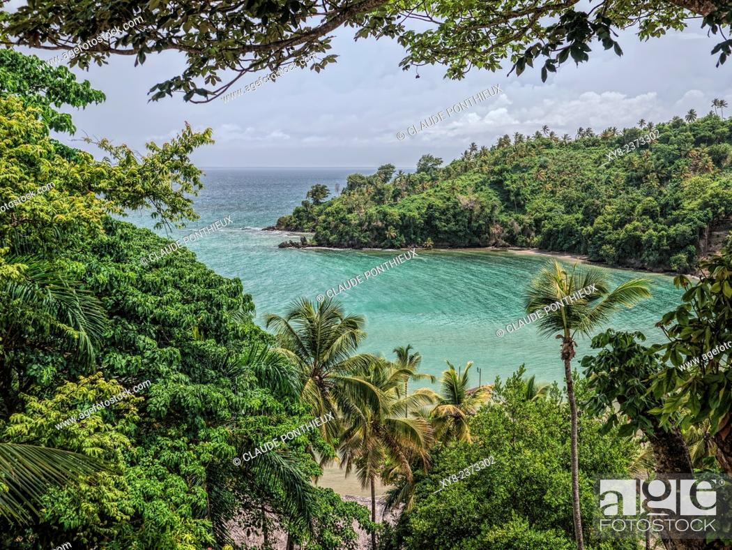 Stock Photo: Tropical forest, Samana, Dominican Republic.