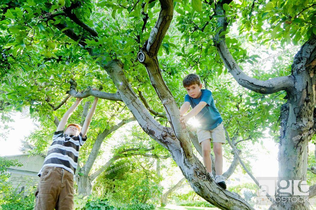 Imagen: Boys climbing tree.