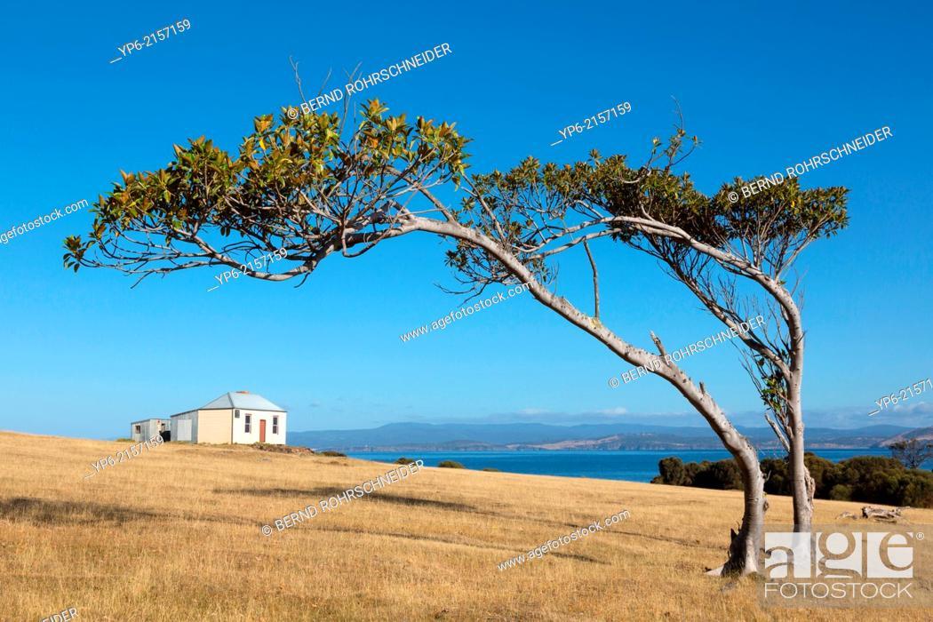 Stock Photo: coastal landscape with bended trees and house, Maria Island, Tasmania, Australia.