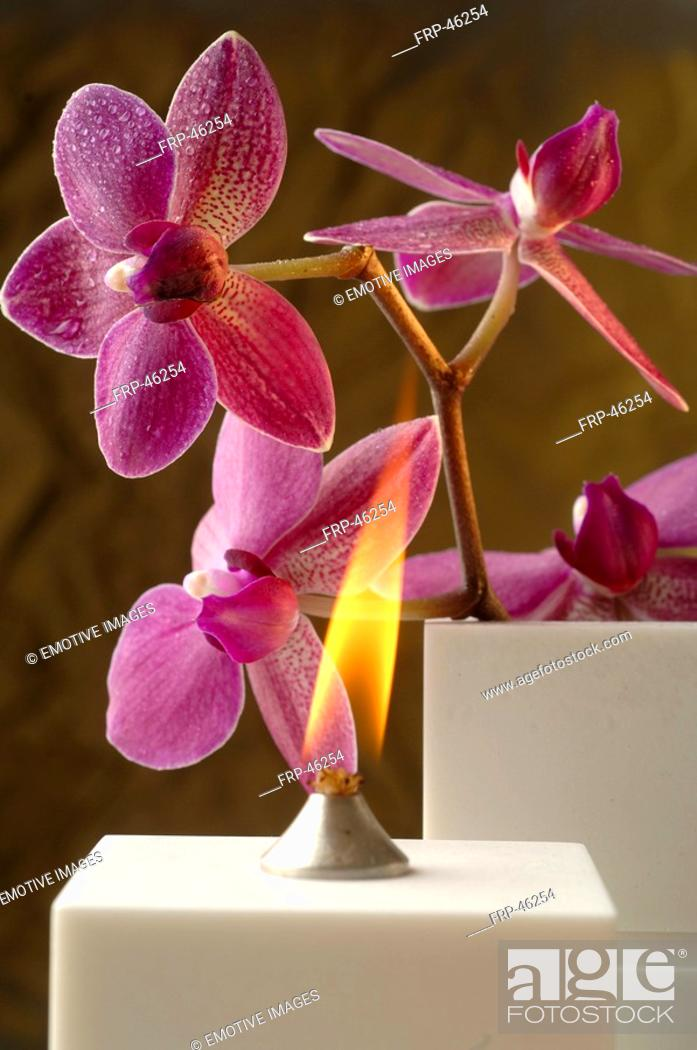 Stock Photo: Aroma oil lamp and orchid blossoms.