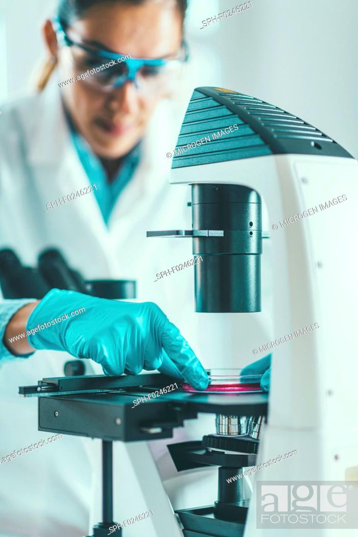 Stock Photo: Biotechnology. Female scientist working in laboratory.