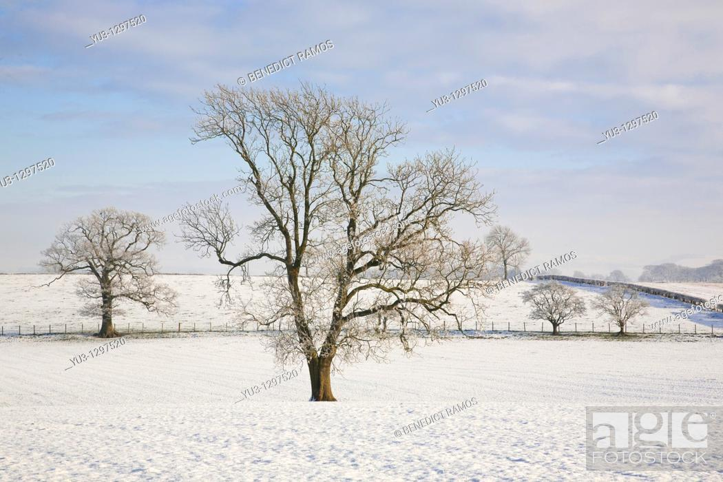 Stock Photo: Trees in snowy landscape near Lochmaben, Dumfries and Galloway, Scotland.