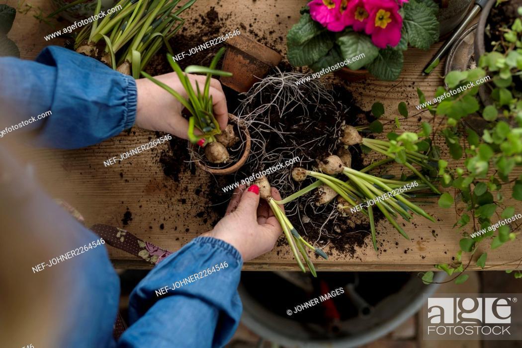 Imagen: Woman planting flowers in winter garden.