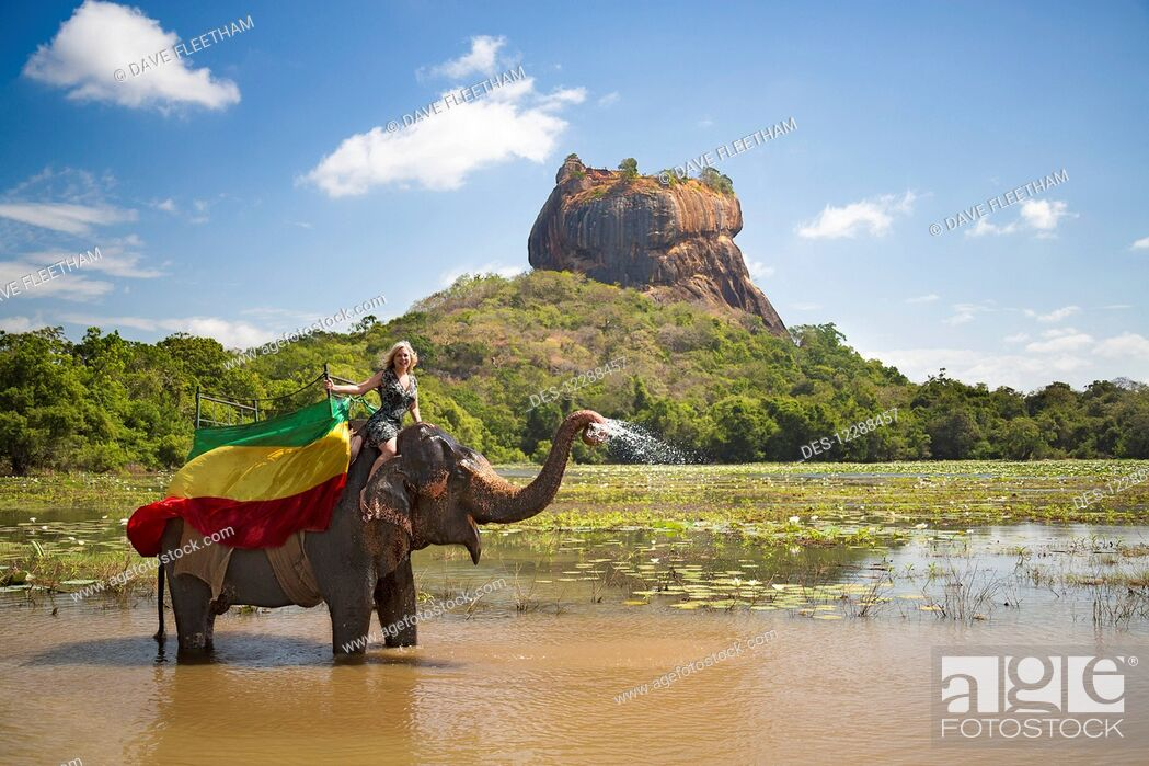 Imagen: A woman on a Sri Lankan elephant (Elephas maximus), Sigiriya, an ancient palace located in the central Matale District near the town of Dambulla in the.