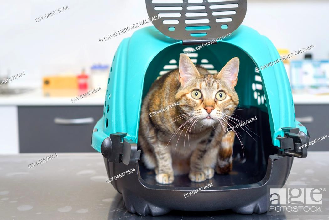 Stock Photo: Cat in kennel at veterinary clinic at animal hospital.