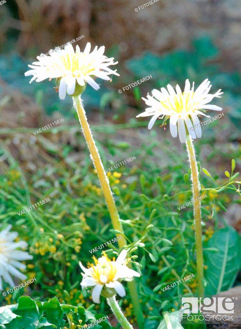 Stock Photo: nature, plant, spring, season, flower, film.