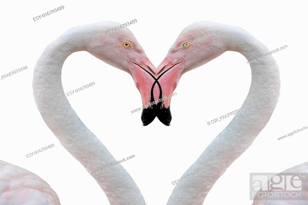 Imagen: two pink flamingo making heart with necks.