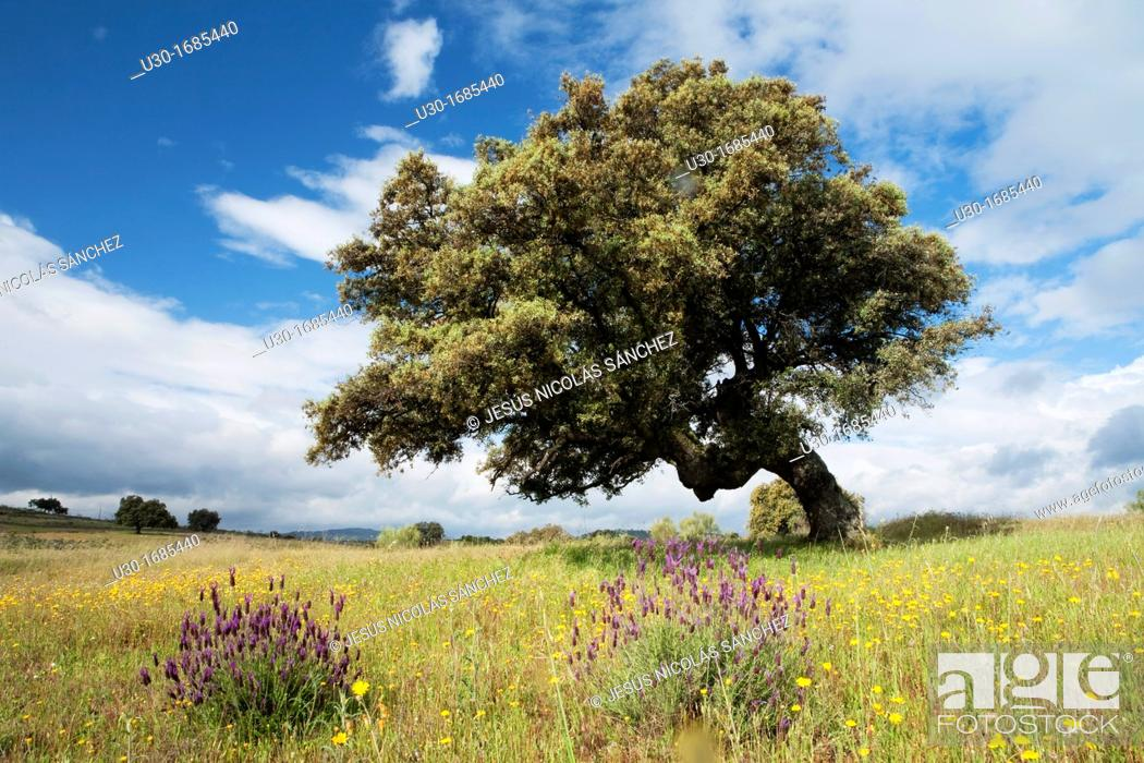 Photo de stock: Landscape in Bohonal de Ibor  Cáceres province  Extremadura  Spain.