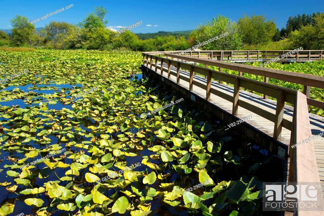 Photo de stock: Boardwalk on Silver Lake Wetland Haven Trail, Seaquest State Park, Washington.