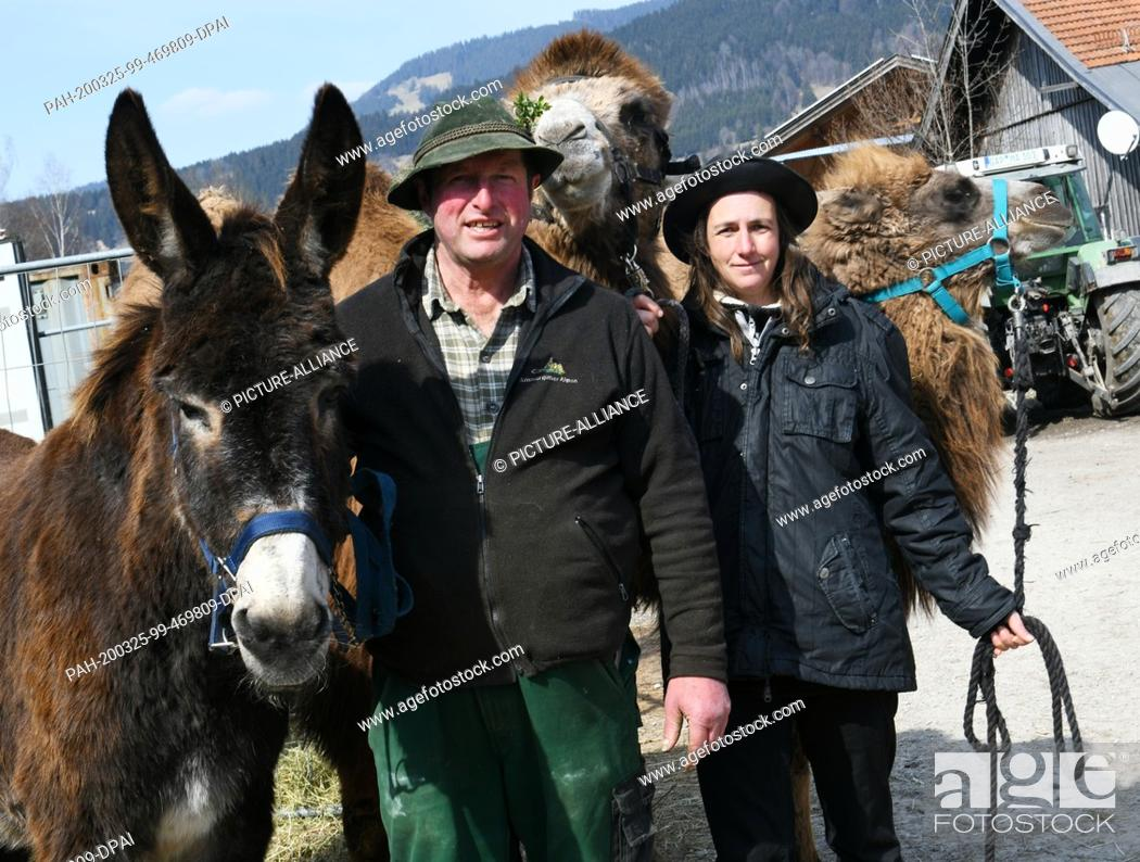 Stock Photo: 24 March 2020, Bavaria, Oberammergau: Farmer Toni Scholler and owner Elke Kerler stand with the Catalan giant donkey Sancho (l) and camels Nalani and Mirell.