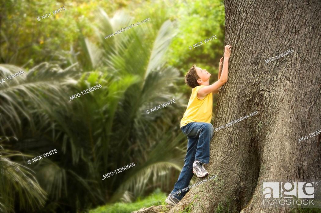 Stock Photo: Boy Climbing Large Tree.