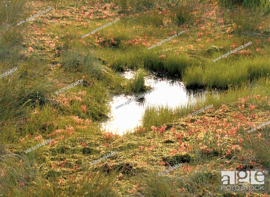 Stock Photo: Pond.