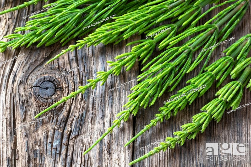 Stock Photo: Fresh horsetail twigs on a rustic wooden background.
