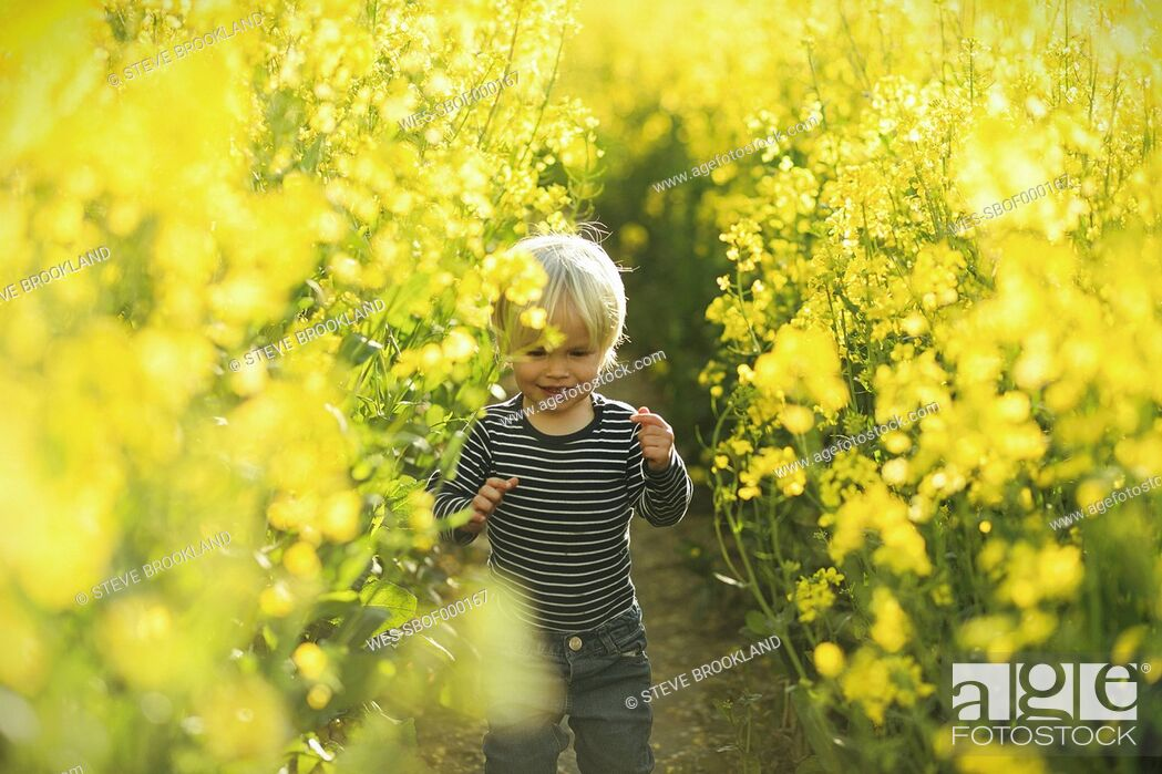 Stock Photo: Boy in canola field.