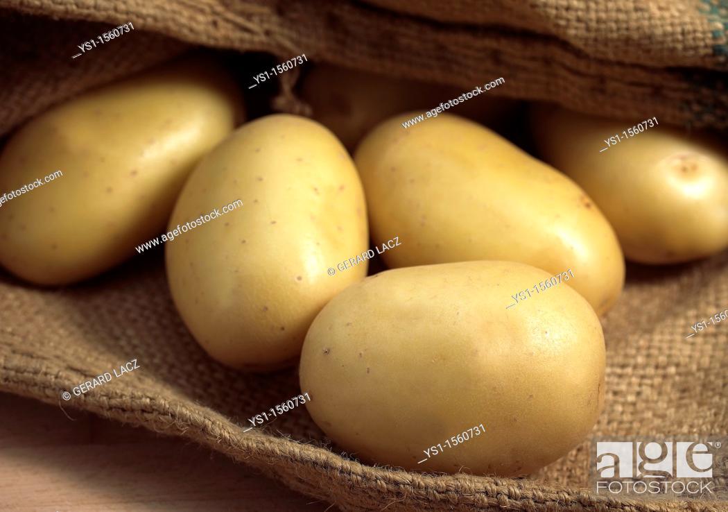 Stock Photo: Mona Lisa Potato, Solanum tuberosum.