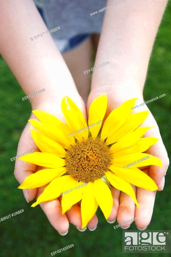 Stock Photo: Beautiful yellow sunflower in a blue sky.
