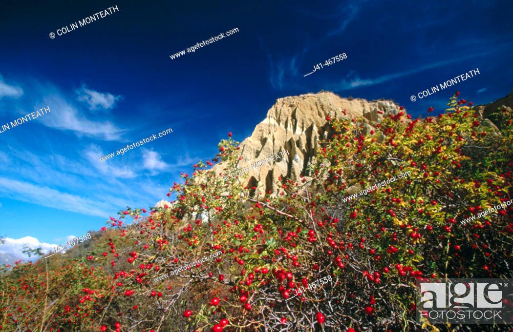 Stock Photo: Hawthorn berries and Clay Cliffs. Autumn colours. Near Omarama. New Zealand.