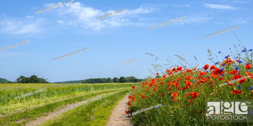 Stock Photo: Wild flowers line a country lane near Kidderminster.