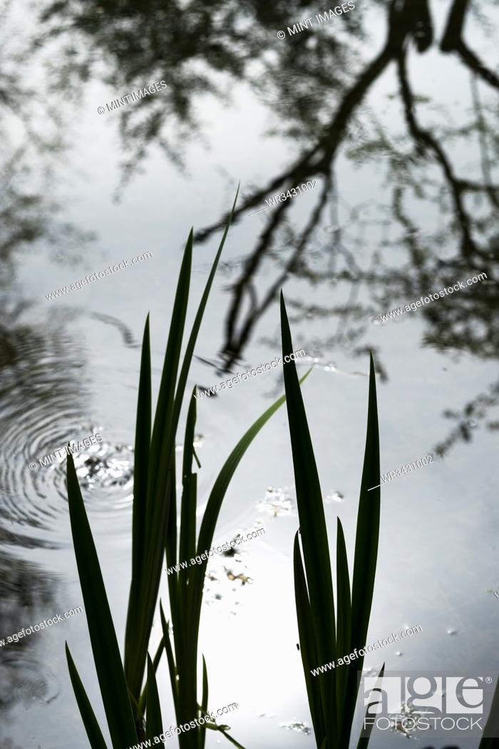 Stock Photo: Close up of fresh green shoots in a garden, reflection of water.
