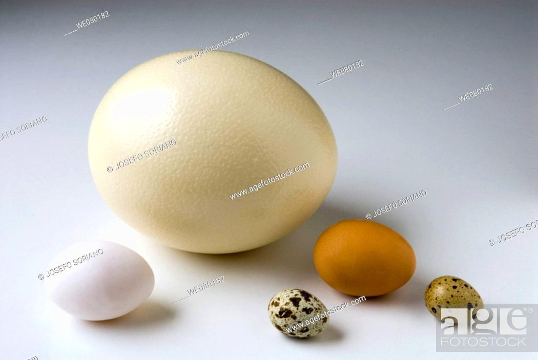 Stock Photo: Ostrich, chicken and quail eggs.