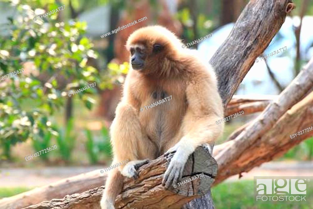 Stock Photo: A monkey in a Khao Kheow Zoo, Chonburi in thailand.