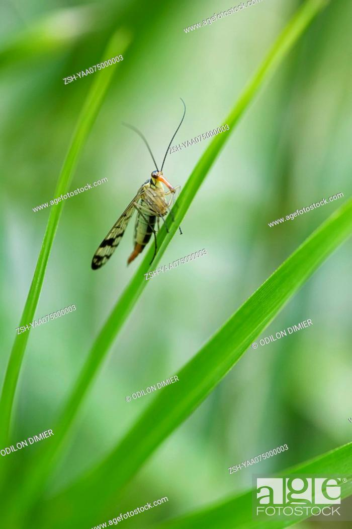 Stock Photo: Insect perched on leaf.