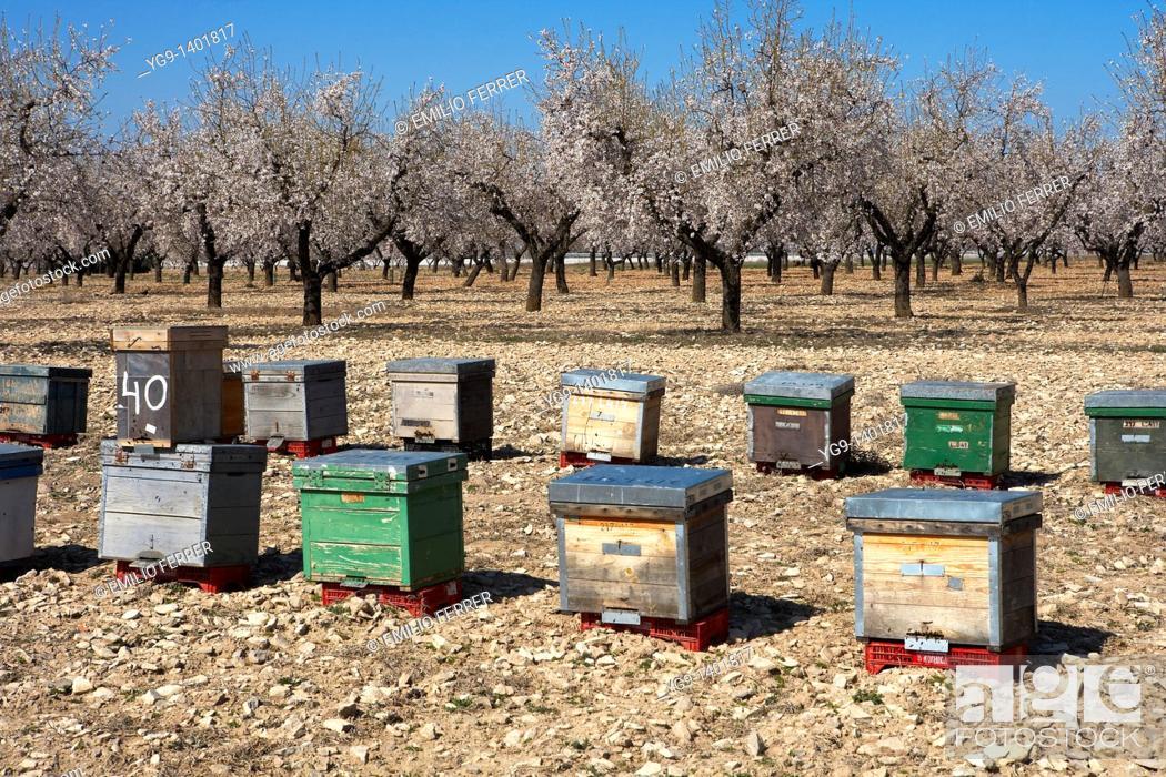 Stock Photo: Apiary between Almond Trees  LLeida, Spain.