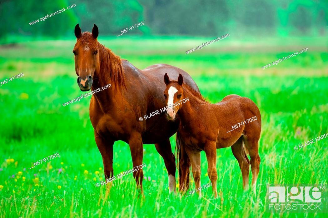 Stock Photo: Horses near Wind Cave National Park, Black Hills, South Dakota USA.