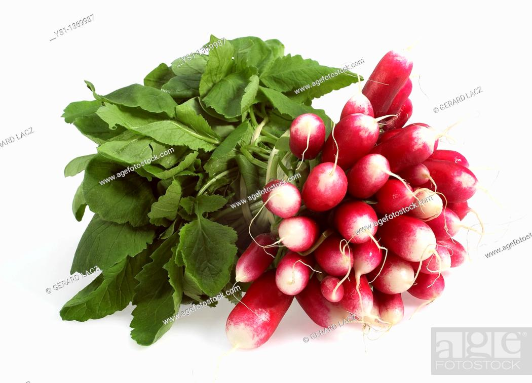 Stock Photo: PINK RADISH raphanus sativus AGAINST WITH BACKGROUND.