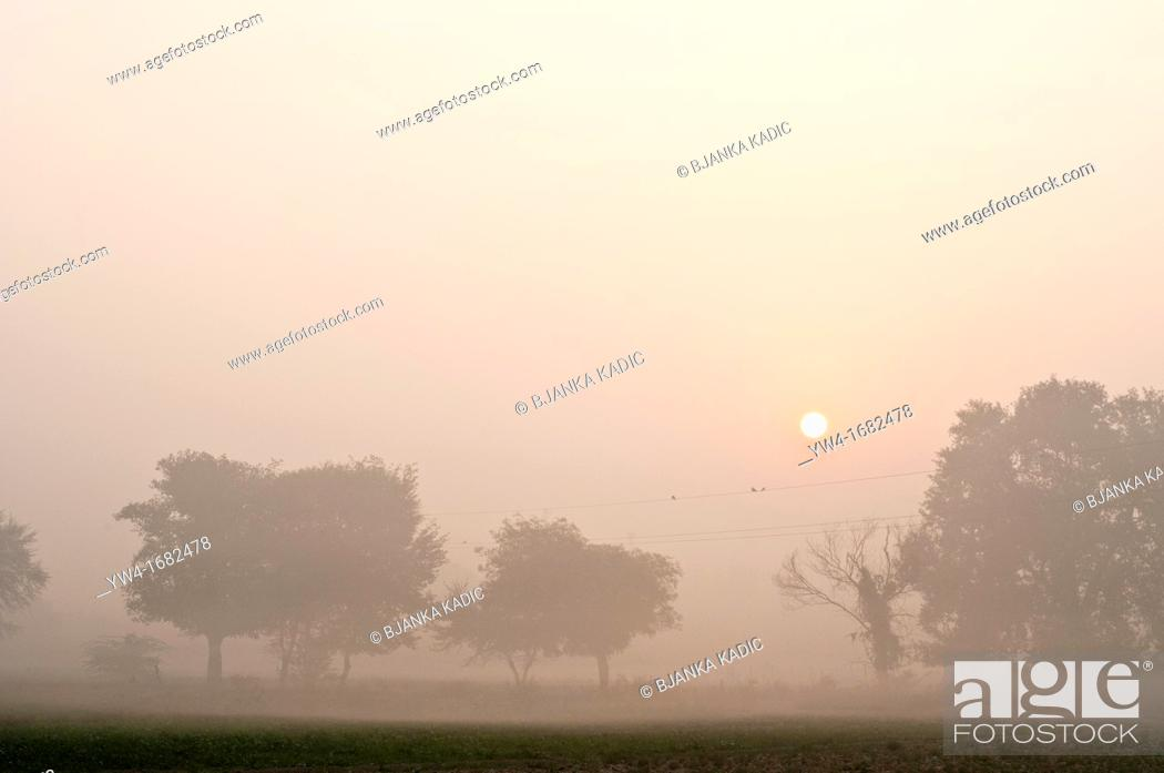 Stock Photo: Misty morning landscape, Vrindavan, Uttar Pradesh, India.
